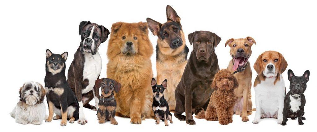 hondenrassen hondententoonstelling de Utrecht