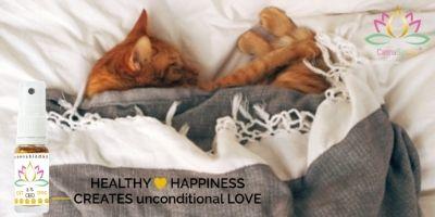 CBD kan een uitkomst bieden bij het kalmeren van uw kat