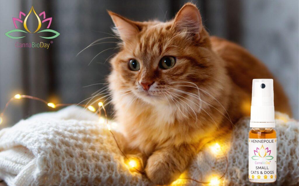 Stress of angst bij uw kat? Ontdek hennepolie.