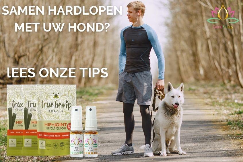 Samen hardlopen met uw hond? Lees onze tips