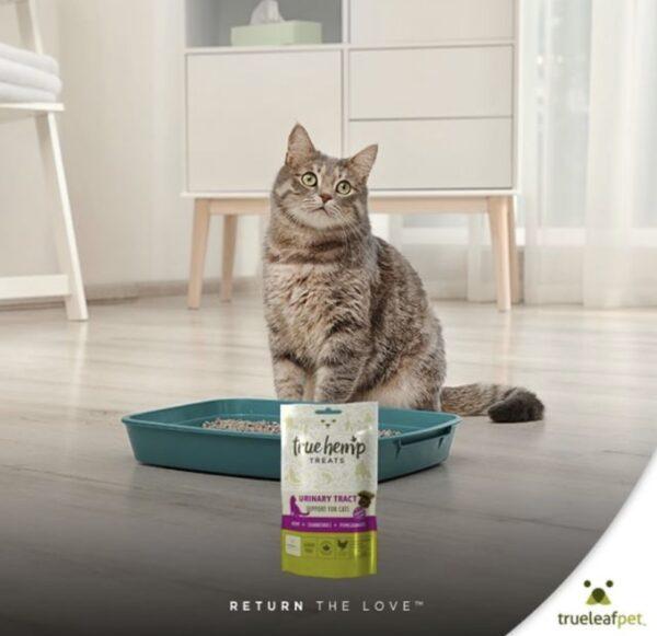 Urinewegen kattenbox Cannabioday